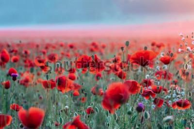Väggdekor Fält av röda vallmo på en solnedgång