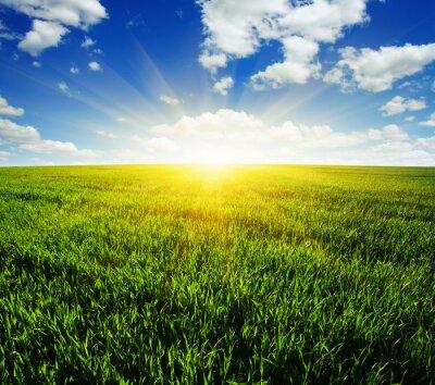 Väggdekor fält och sol
