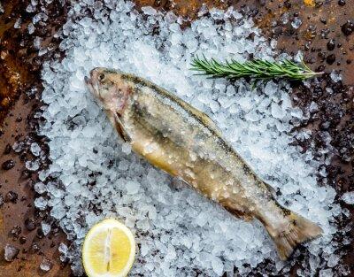 Väggdekor färsk fisk