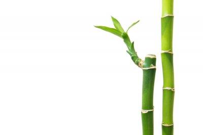 Väggdekor Färska bambu isolerad på vit bakgrund