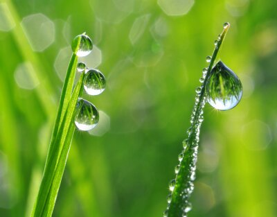 Väggdekor Färskt gräs med daggdroppar närbild