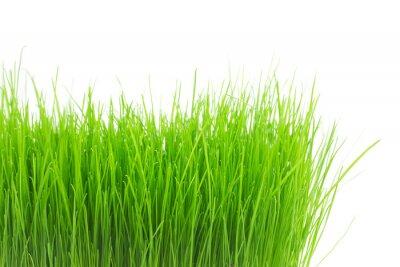Väggdekor Färskt grönt gräs