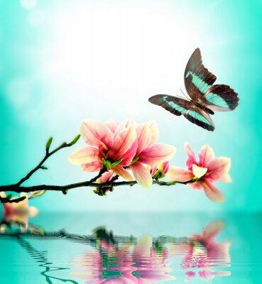 Väggdekor Fjäril och blomma magnolia
