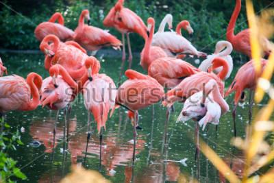 Väggdekor flamingo on the pond
