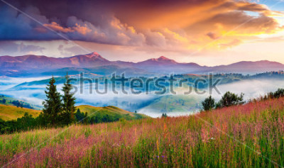 Väggdekor Foggy summer sunrise in the Carpathian mountains. Colorful morning scene in the mountain valley. Beauty of nature concept background. Artistic style post processed photo.