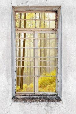 Väggdekor Fönster av gamla cement hus med utsikt över skogen