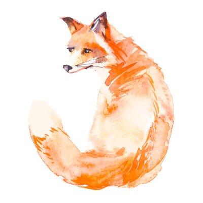Väggdekor Fox isolerad på vit bakgrund. Vattenfärg. .