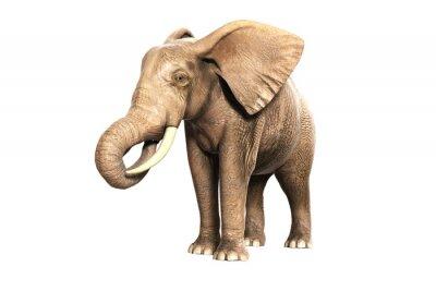 Väggdekor Freigestellter elefant på äta (renderad bild)