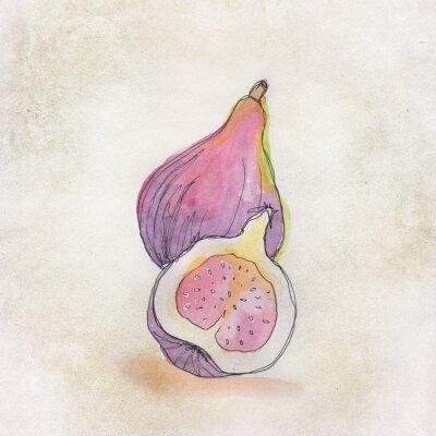 Väggdekor Frukt illustration med akvarell