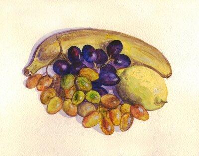 Väggdekor Frukt, vindruvor, citron, banan. akvarellmålning