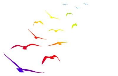 Väggdekor Gabbiani, Volare, Volo, arcobaleno, tempo