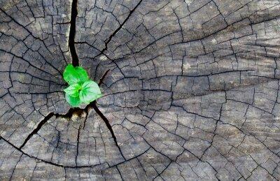 Väggdekor gammalt trä