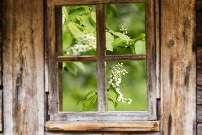 Väggdekor Gammalt trä fönsterram, våren, blommande träd.