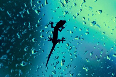 Väggdekor Gecko På glasfönster Wet med regndroppar