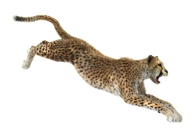Väggdekor Gepard