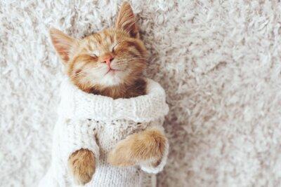 Väggdekor Gigner kattunge
