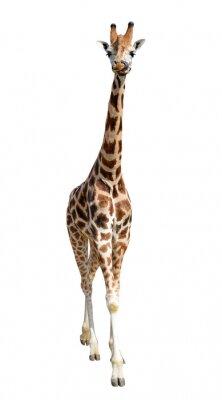 Väggdekor giraff isolerad på vit bakgrund