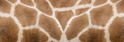 Väggdekor Giraffe skin Texture - Image 1