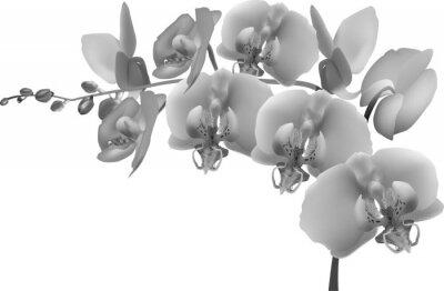 Väggdekor grå orkidé gren på vit bakgrund