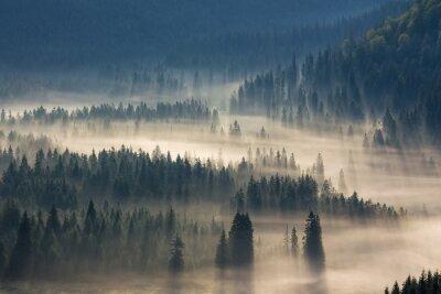 Väggdekor granar på en äng ner viljan att barrskog i dimma berg