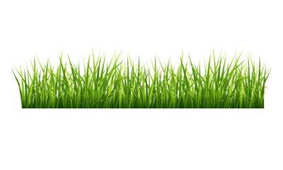 Väggdekor Gräs