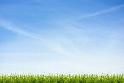 Väggdekor Gräs gräs under blå himmel och moln