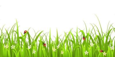Väggdekor Gräs med nyckelpiga isolerad på vit bakgrund