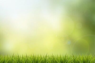 Väggdekor Gräs och grön natur suddig bakgrund