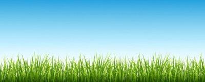 Väggdekor Gräs och himlen