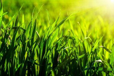 Väggdekor gräs och solljus
