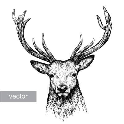 Väggdekor gravera hjortar illustration