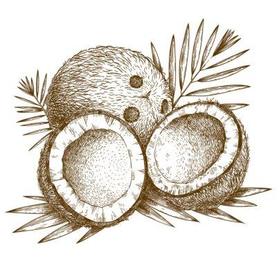Väggdekor gravyr illustration av kokos och palmblad