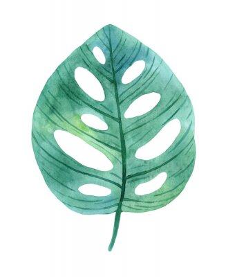 Väggdekor Green leaves of monstera from humid rainforest.