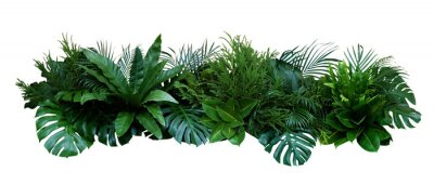 Väggdekor Green leaves of tropical plants bush (Monstera, palm, rubber plant, pine, bird's nest fern) floral arrangement indoors garden nature backdrop isolated on white background, clipping path included.