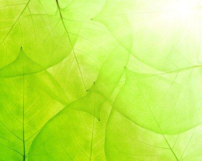 Väggdekor grön bakgrund från tunna blad