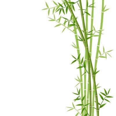 Väggdekor Grön bambu på vit bakgrund, vektor illustration