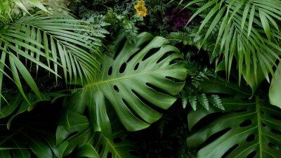 Väggdekor Grön tropiska löv Monstera, palm, bärnsten och prydnadsväxter bakgrund bakgrund