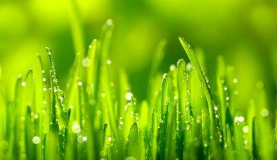 Väggdekor Grönt gräs