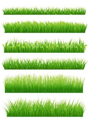 Väggdekor Grönt gräs gränser inställd på vitt. vektor