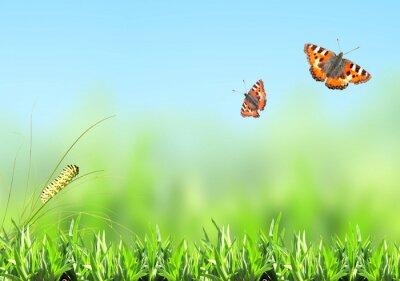 Väggdekor Grönt gräs, larv och fjäril
