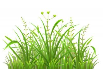 Väggdekor Grönt gräs mönster på vit bakgrund