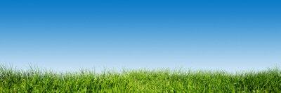 Väggdekor Grönt gräs på blå klar himmel, vår naturtema. Panorama