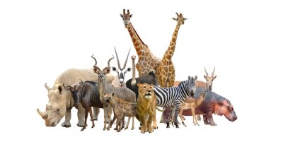 Väggdekor grupp av Afrikas djur