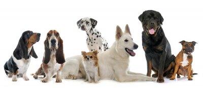 Väggdekor grupp av hundar