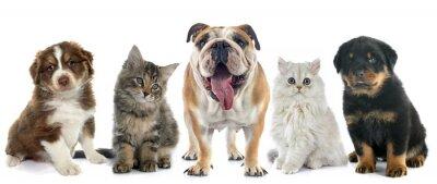 Väggdekor grupp av sällskapsdjur