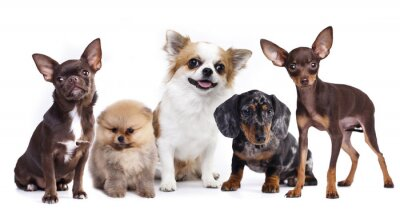 Väggdekor grupp av små dekorativa hund följeslagare