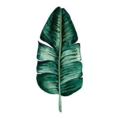 Väggdekor Hand drawn watercolor tropical plants set. Exotic palm leaves, jungle tree, brazil tropic botany elements.