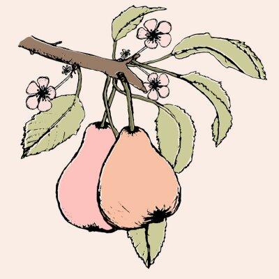 Väggdekor Handritad gren med par av päron, blommor och blad