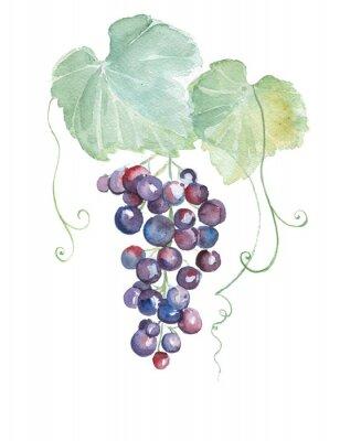 Väggdekor Handritad vattenfärg illustrationer av lila druvor
