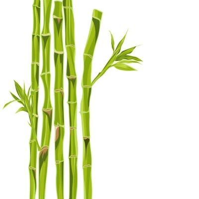 Väggdekor Handritade grön bambu bacground med utrymme för text